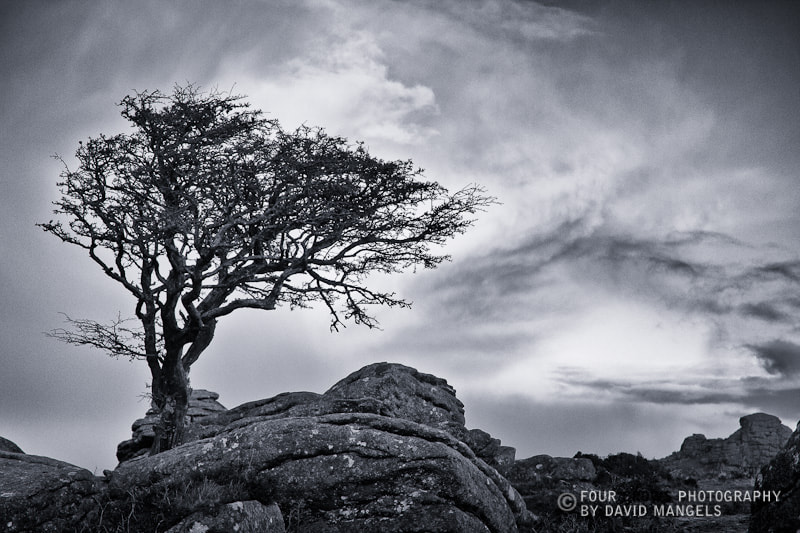 Photograph Lone Tree, Saddle Tor by David  Mangels on 500px