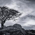 Lone Tree, Saddle Tor
