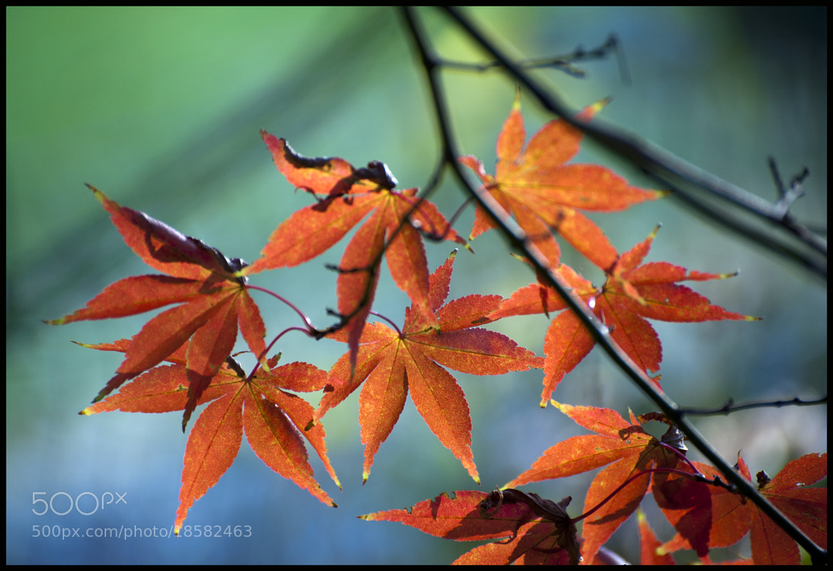 Photograph a touch of color by David Ottavio on 500px