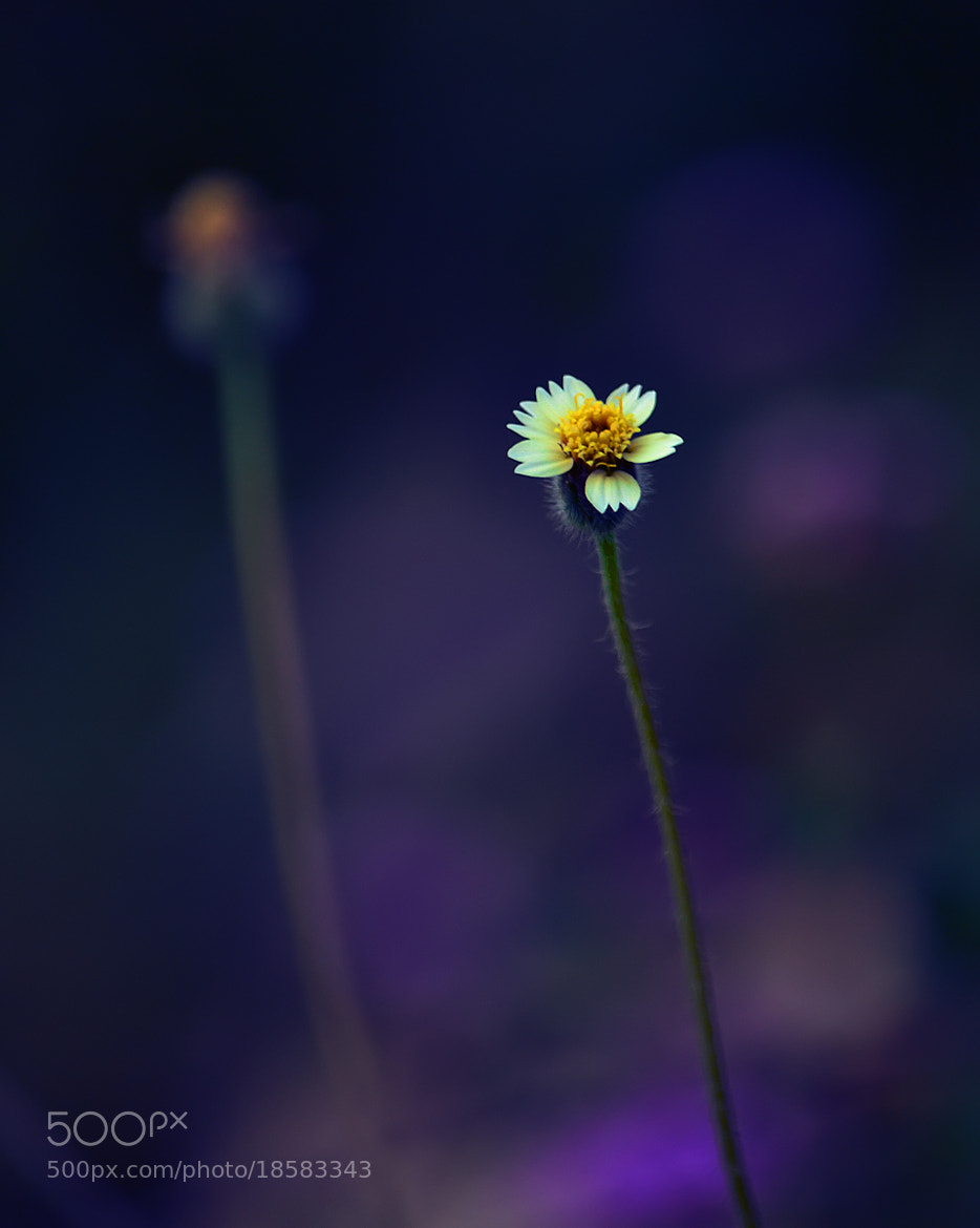 Photograph THE FLOWER by yogesh waikul on 500px