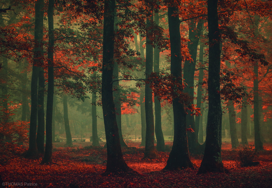 Red mood! by Patrice Thomas on 500px.com