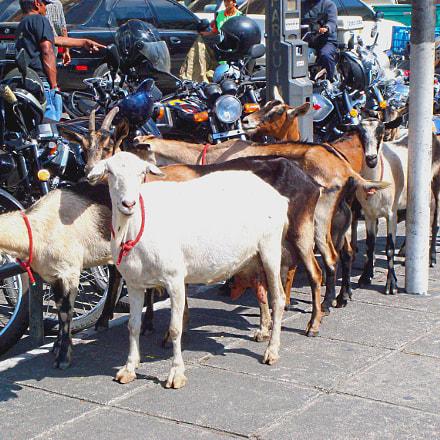 GUATEMALA (Guatemala) - Turistas