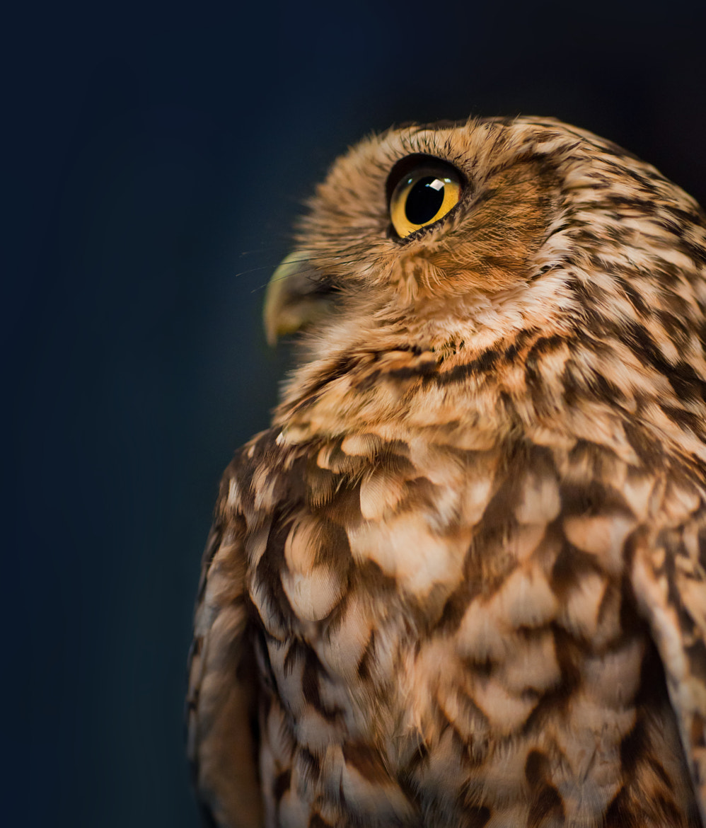 Photograph Watch the Birdie by Tony Morgan on 500px
