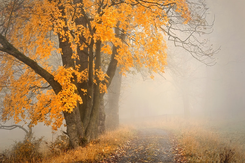 Photograph AUTUMN by TOMÁŠ MORKES on 500px
