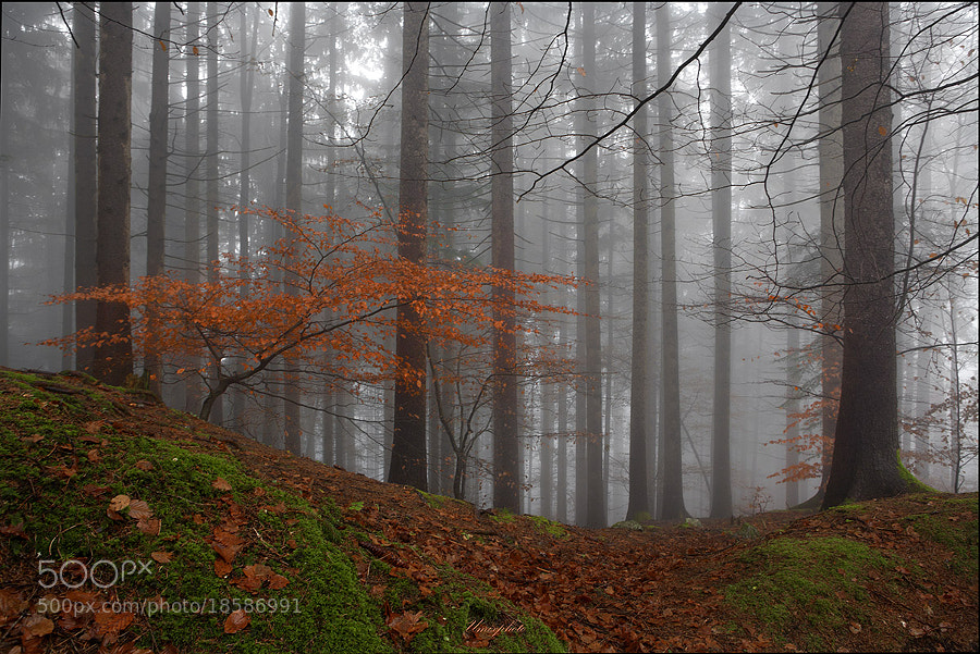 Photograph Autumn In Forrest by Jaro Miscevic on 500px