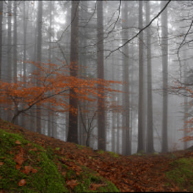 Autumn In Forrest by Jaro Miscevic (jaromiscevic)) on 500px.com