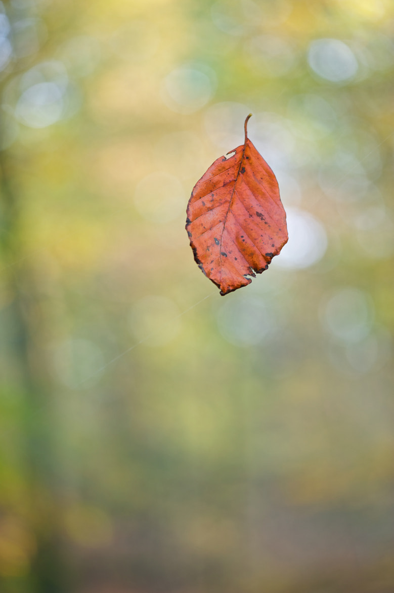 Photograph Floating leaf by Hubert Descamps on 500px