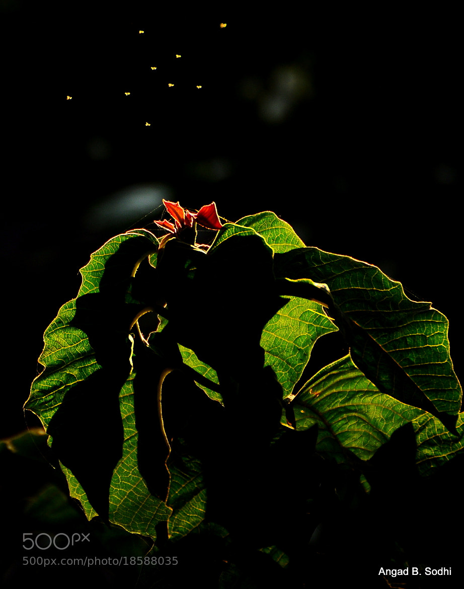 Photograph Fireflies by Angad B. Sodhi on 500px