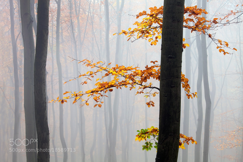 Photograph Autumn by Martin Rak on 500px