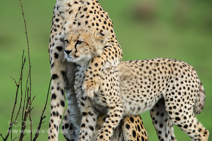 Photograph Mother Love by David Lloyd on 500px