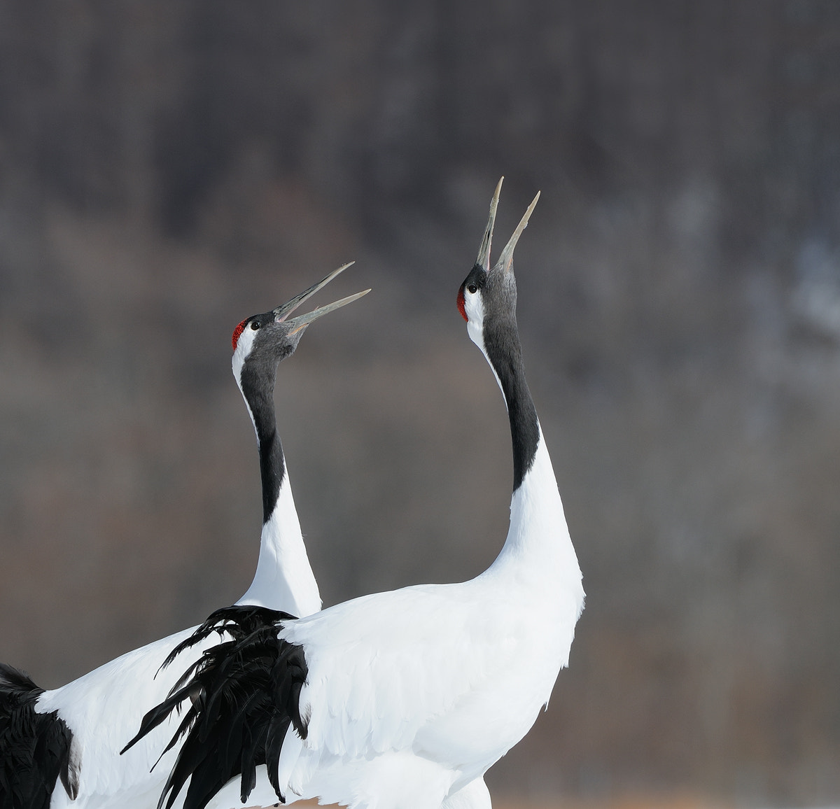 Photograph Serenade by Harry  Eggens on 500px