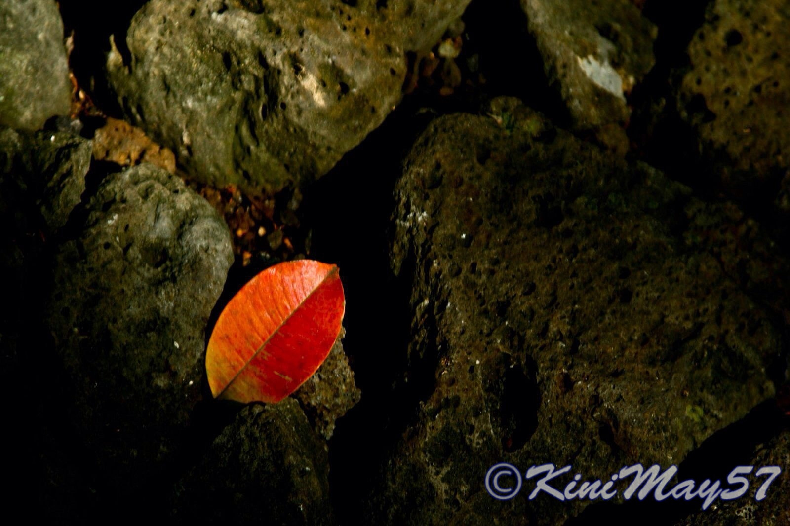 Photograph Fallen Red by Cindy Aona on 500px