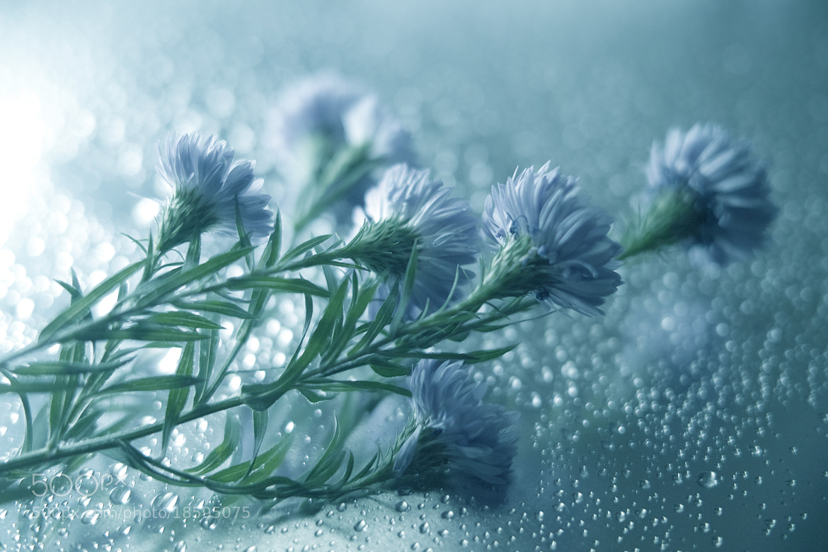 Photograph For winter steps by Lafugue Logos   on 500px