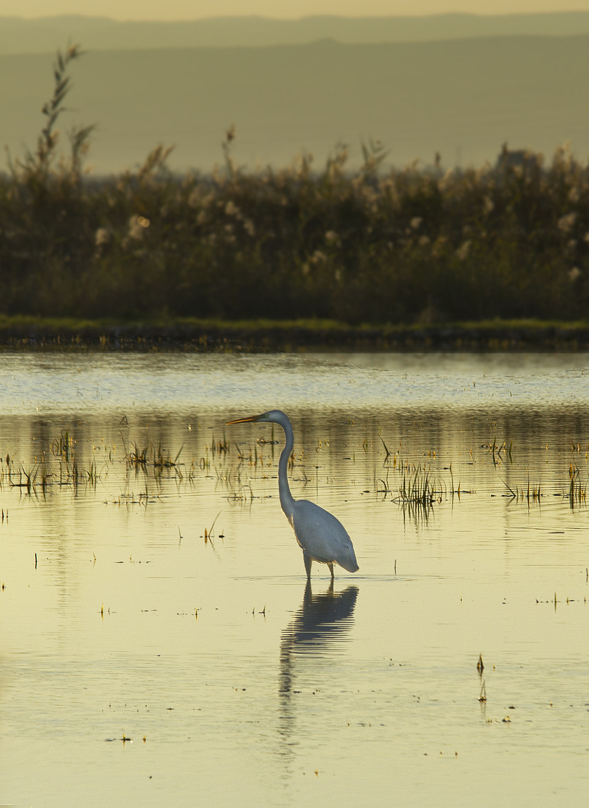 Photograph Parada En La Albufera by ELE PUCH on 500px