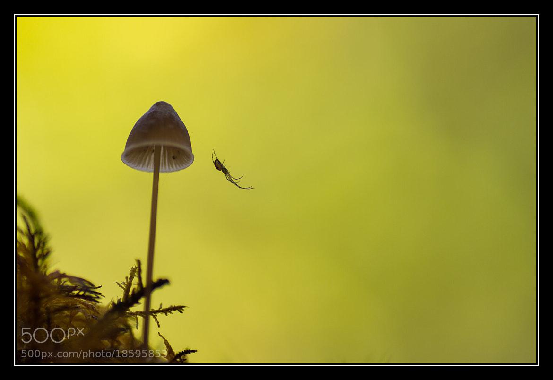Photograph Spiderland by Israel Gutiérrez on 500px