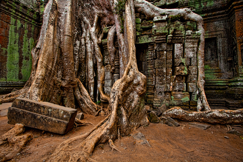 Photograph Ta Prom, Angkor Wat National Park by Michel Latendresse on 500px
