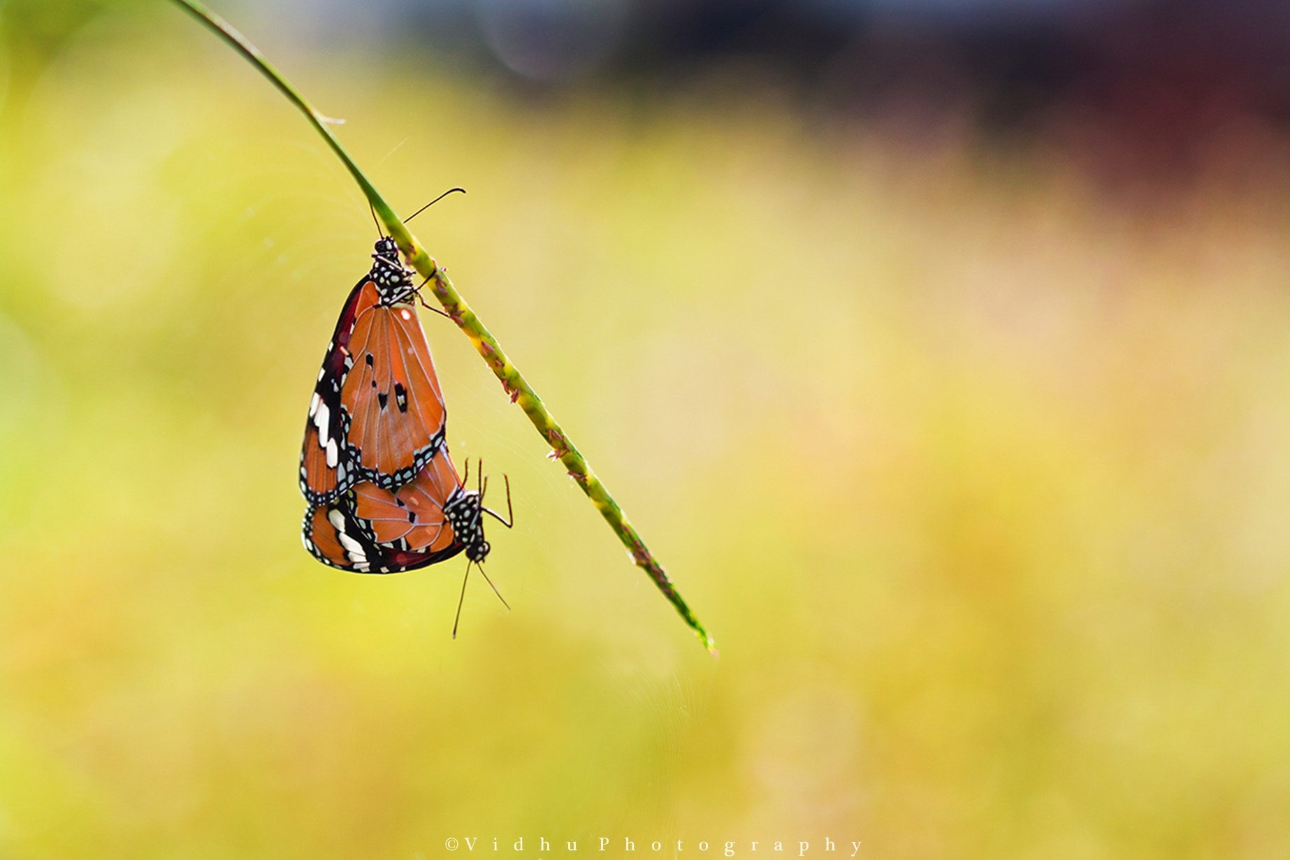 """Photograph """"Hang on, mate"""" [pun intended] by Vidhu S on 500px"""