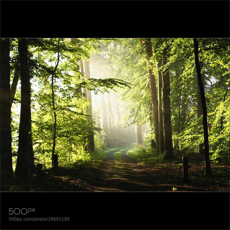 Photograph the mighty light by bob van den berg on 500px