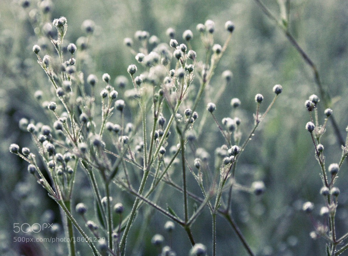 Photograph freshness and coolness by Evil Raymond on 500px