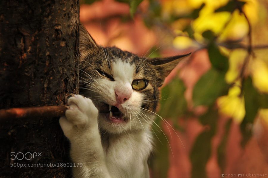 Photograph Snack Time by Zoran Milutinovic on 500px