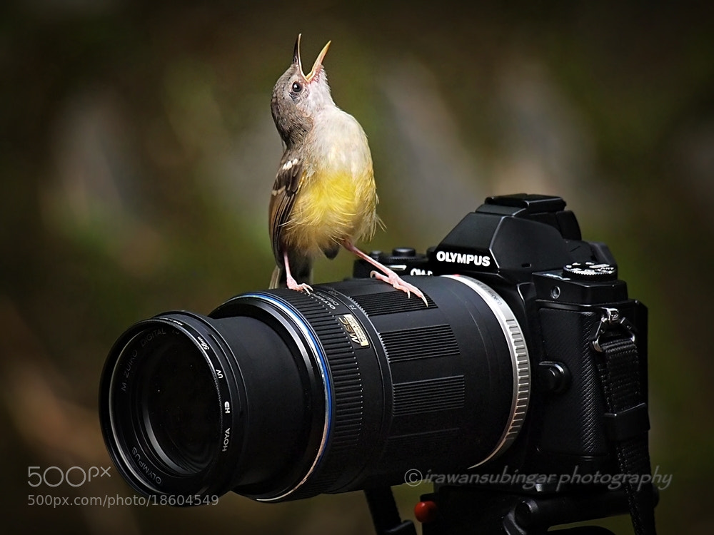 Photograph oohh, yeeaahh !! by Irawan Subingar on 500px