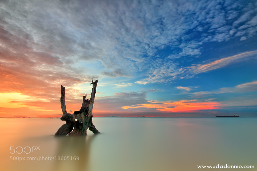 Photograph Smooth Nature by Uda Dennie on 500px