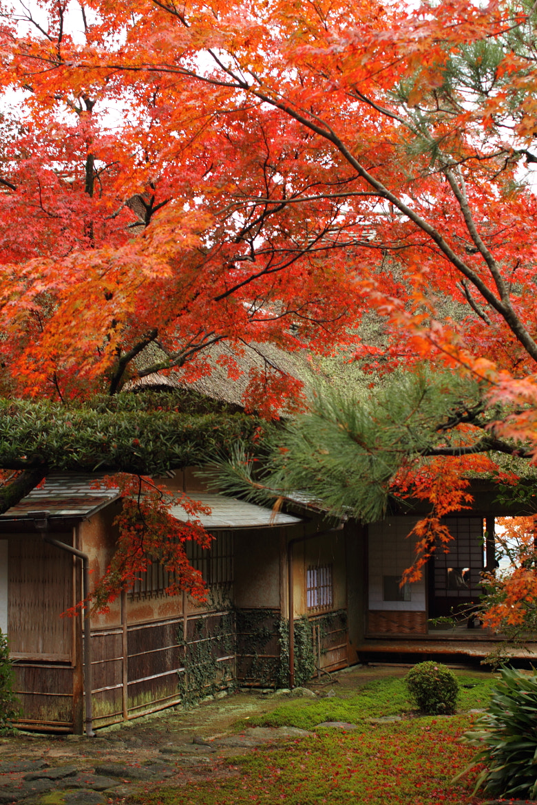 Photograph Red leaves in Kunen An garden by Tetsuya Katsuge on 500px