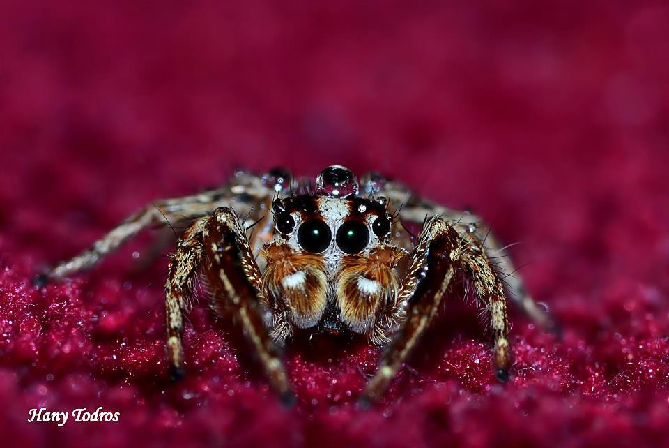 Photograph Spiderman by Hany Todros on 500px