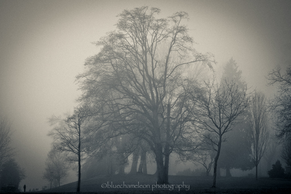 Photograph memories in future tense by Sharon  Wish on 500px