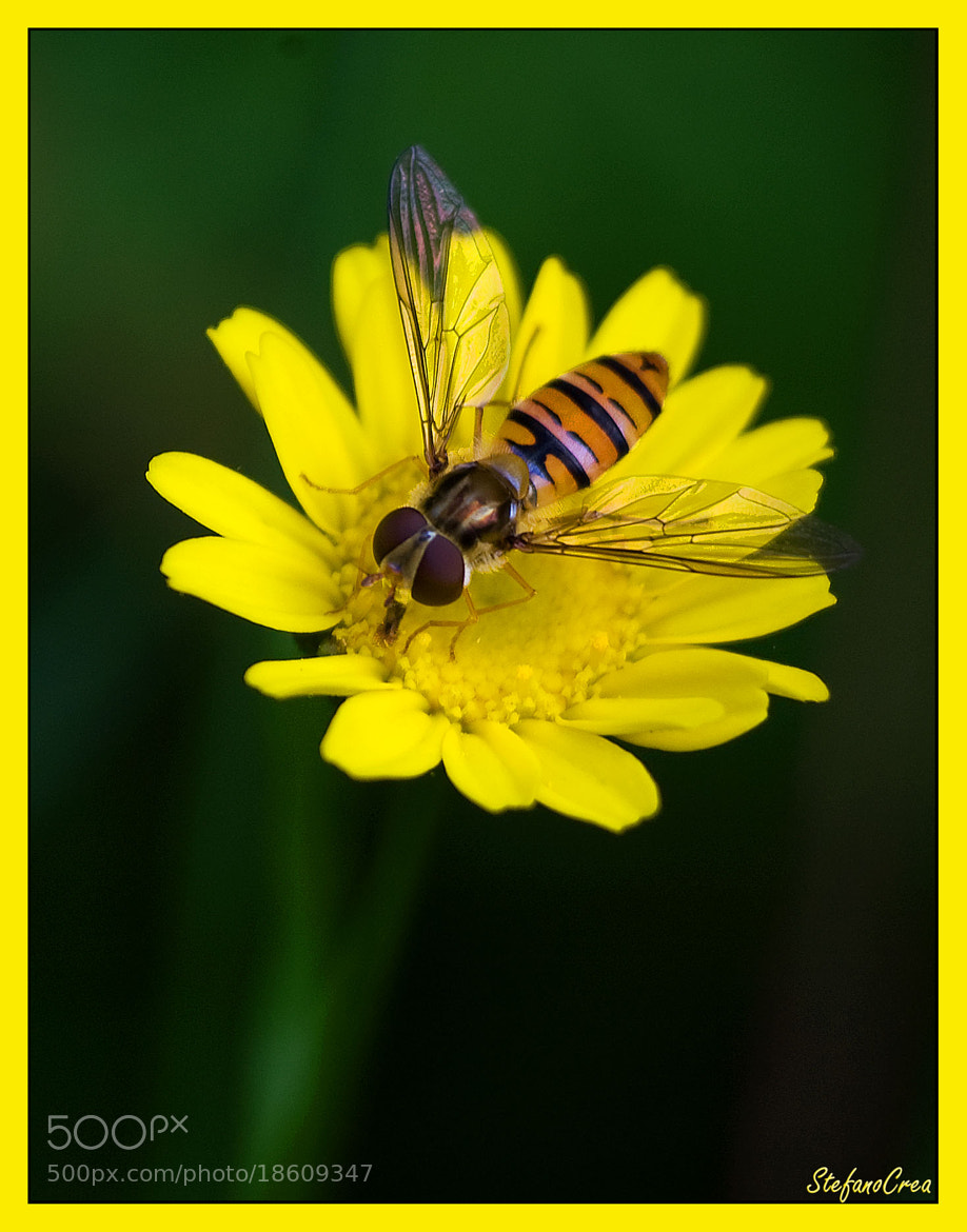 Photograph On yellow flower by Stefano Crea on 500px