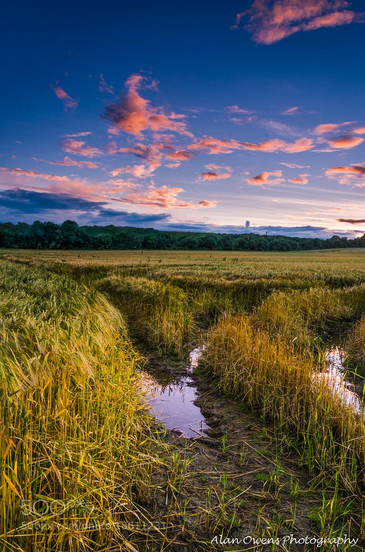 Photograph Summer Awakening by Alan Owens on 500px