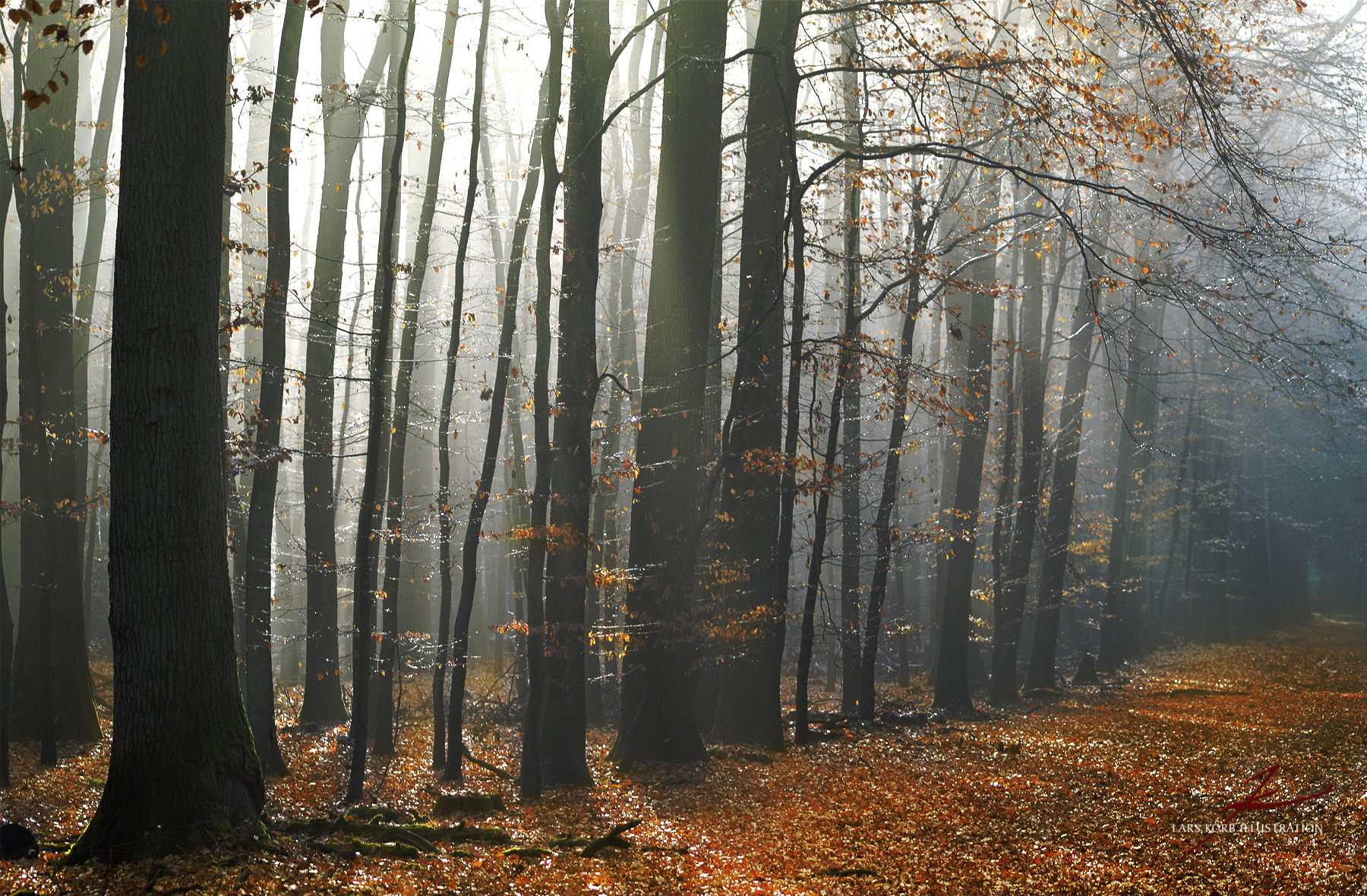 Photograph Humidity of November by Lars Korb on 500px