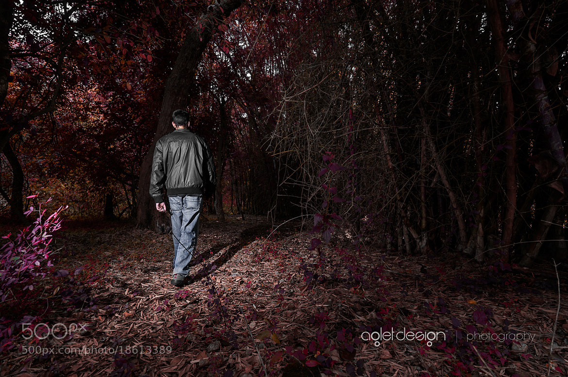Photograph Walk In The Woods by Raghunath Rajaram on 500px