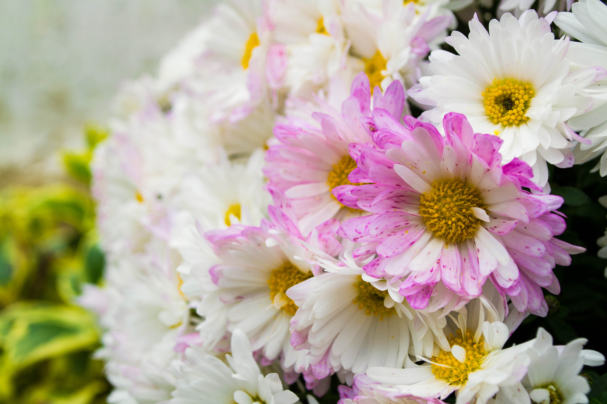 Photograph Flowers by Dexon Dee on 500px
