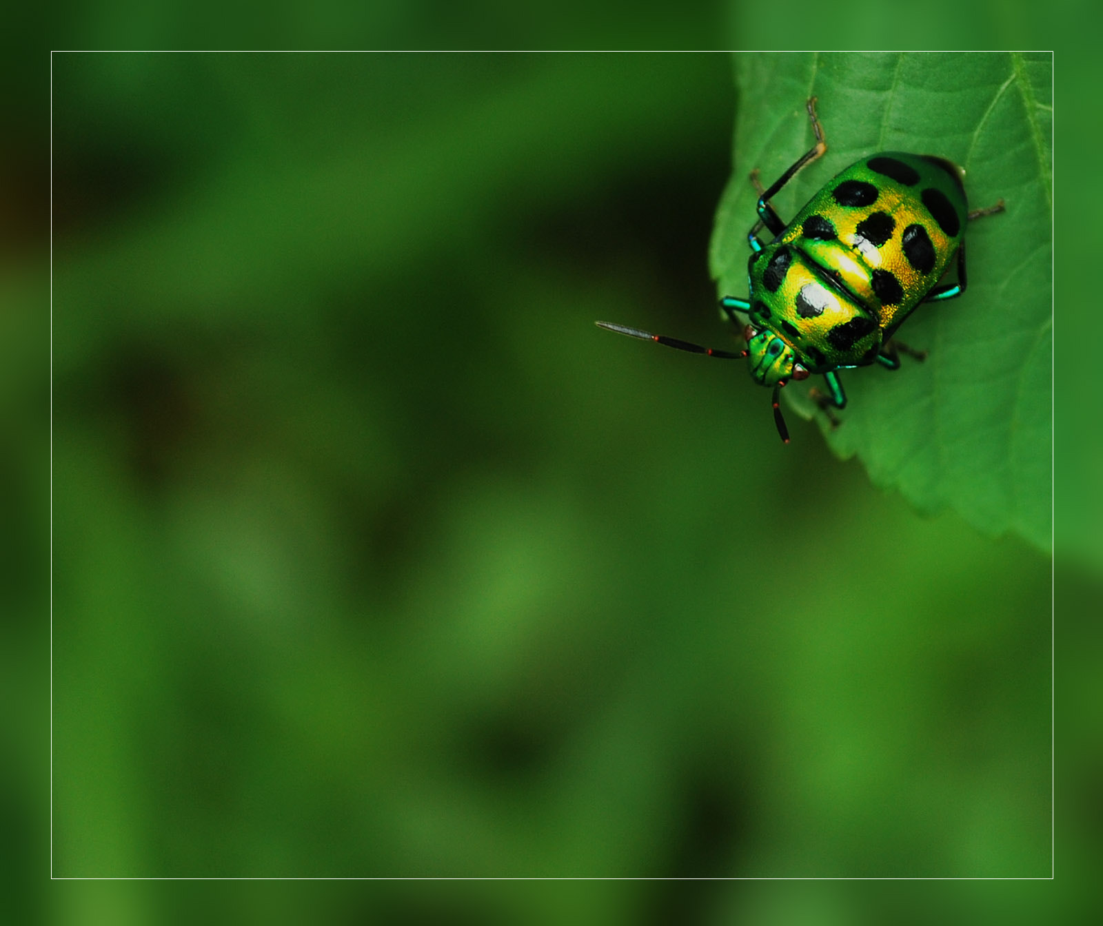 Photograph GREEN ON GREEN by Maroof Rana on 500px