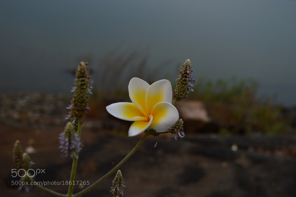 Photograph Flower by sajan Laks on 500px
