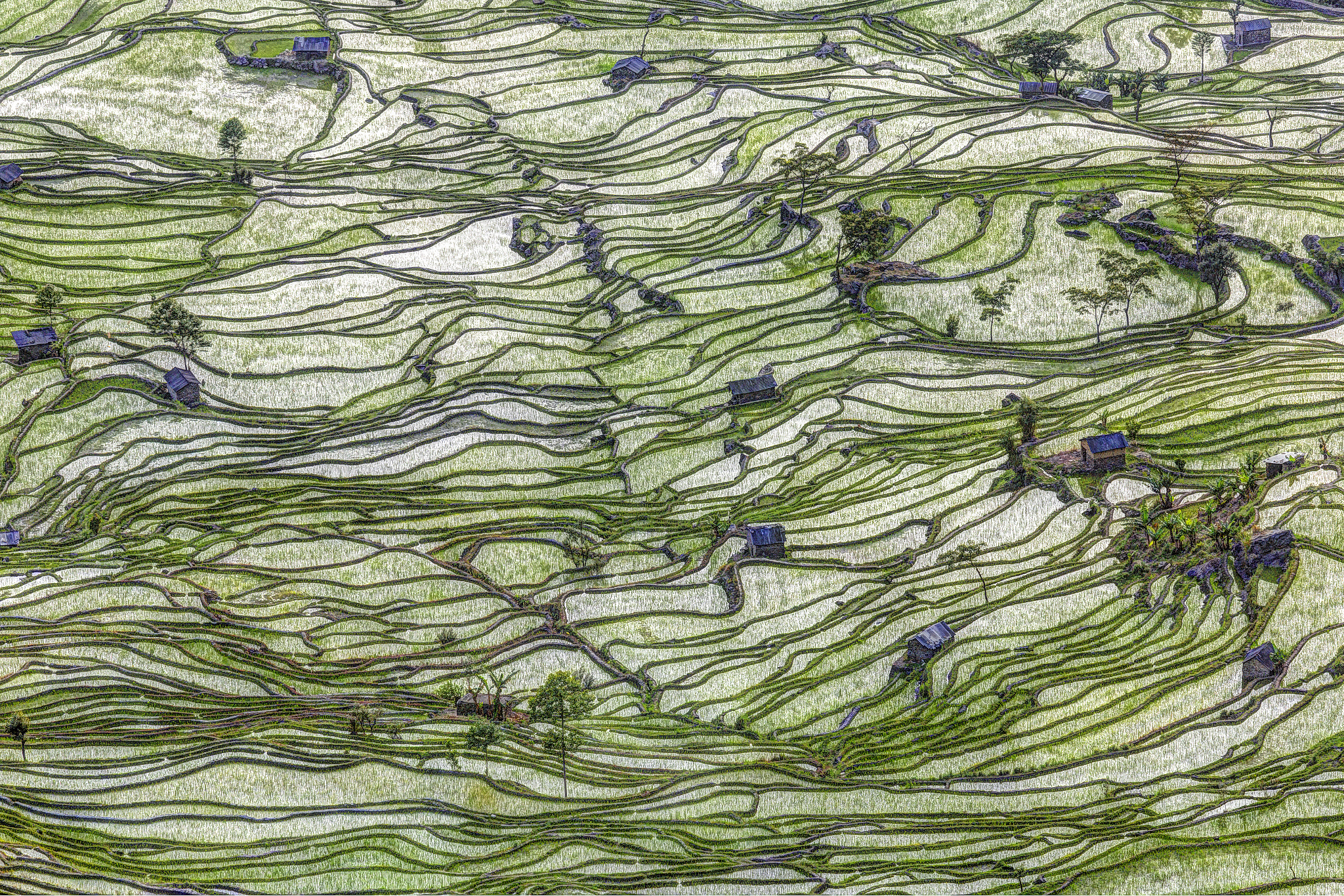 Photograph Ricefield Patterns #5 by Chaluntorn Preeyasombat on 500px