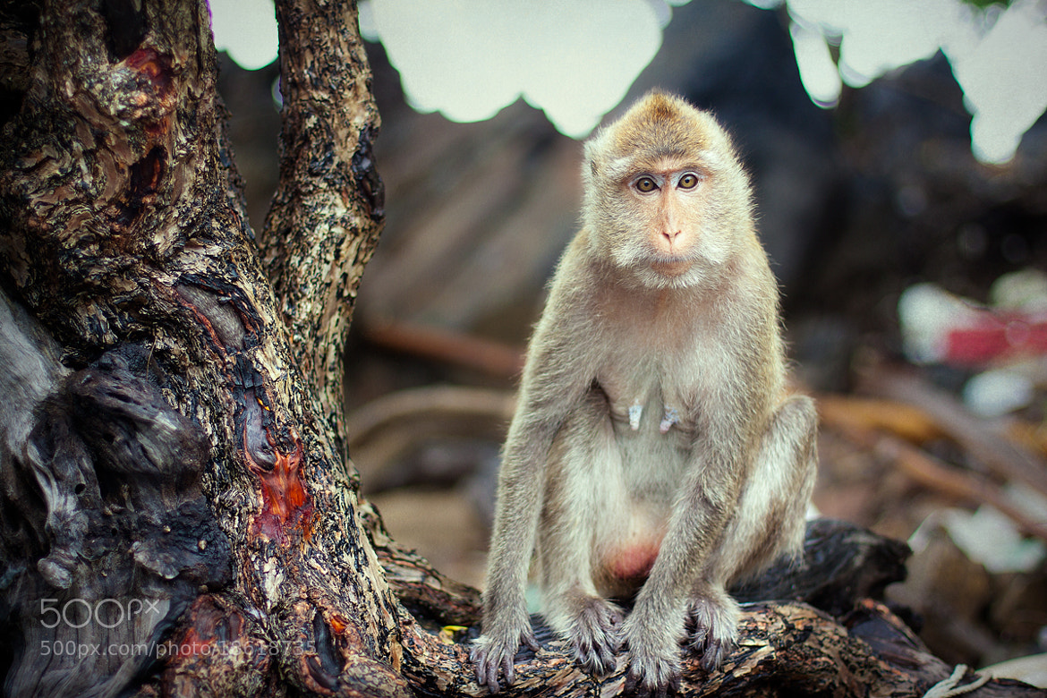 Photograph monkey island by Anton Likhach on 500px