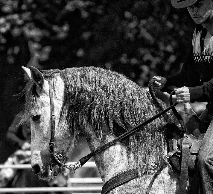 Photograph EQuitation Western by Eric Dimarcantonio on 500px