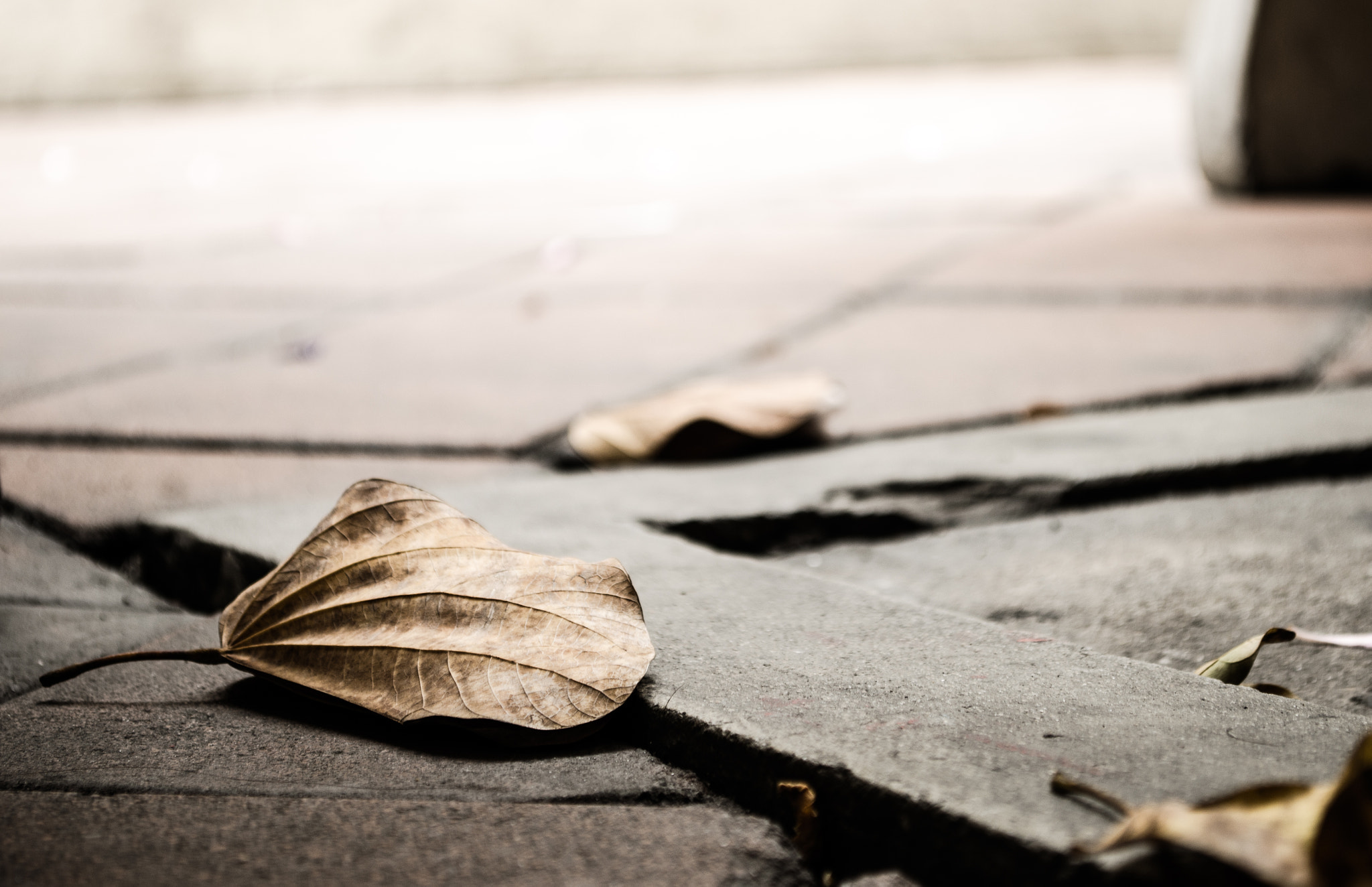 Photograph Haggard leaves by Saranyu Wongwian on 500px
