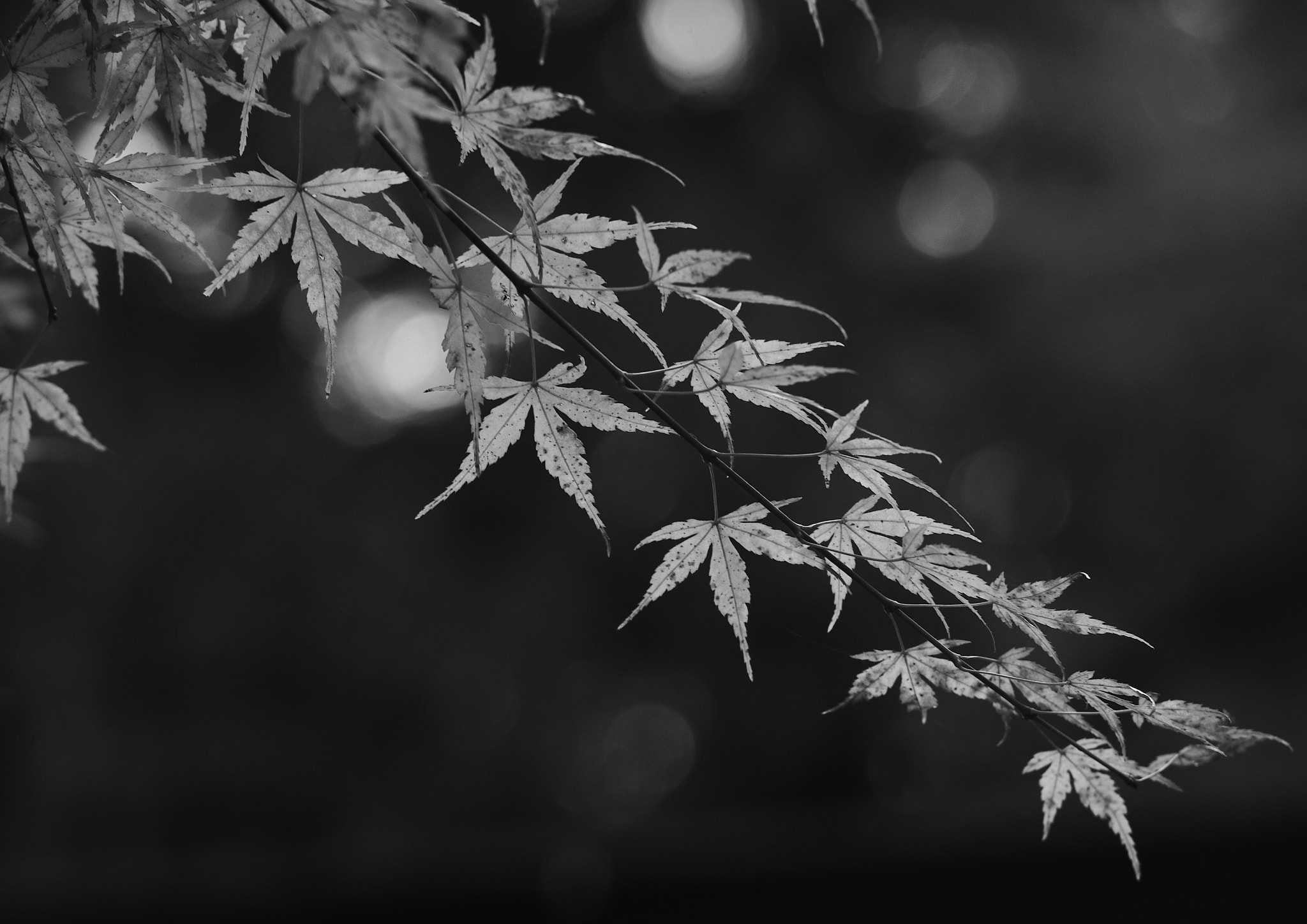 Photograph B&W by Chihiro Imahashi on 500px
