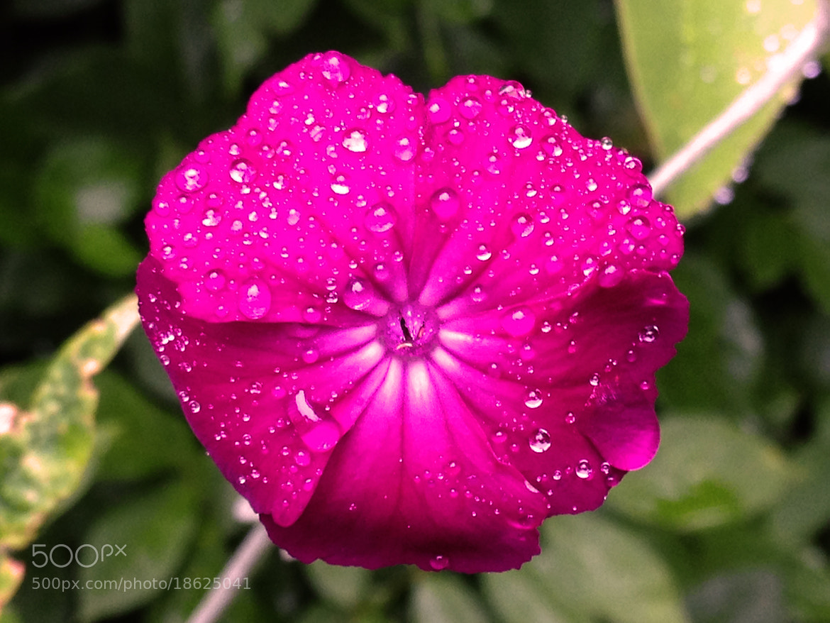 Photograph Raindrops on flower by Mark Jones on 500px
