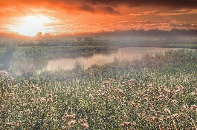 Photograph along the lek by Patrick Strik on 500px