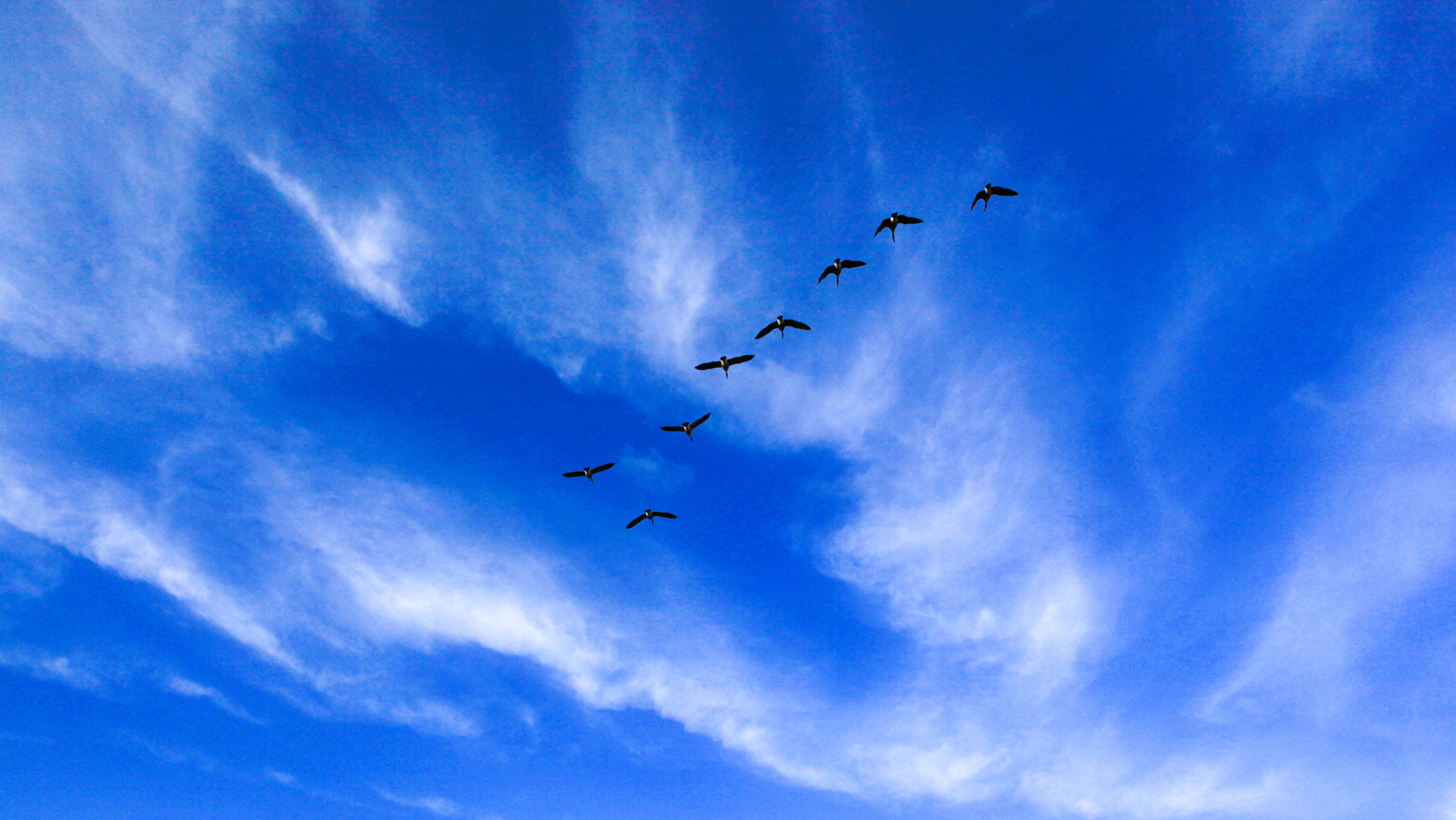 Photograph [ Free Wings ]  by Anh Gerrard  on 500px