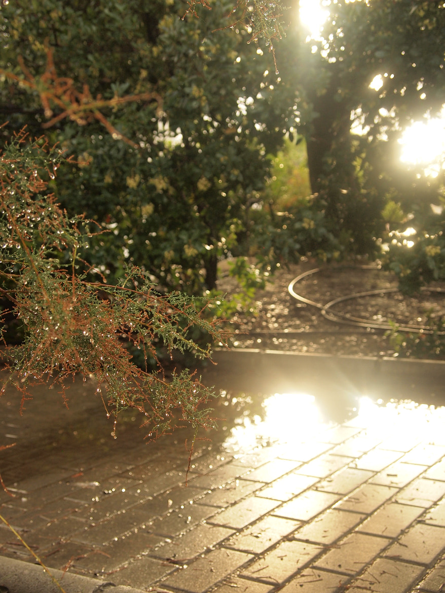 Photograph Sunshine by Louise Castro on 500px