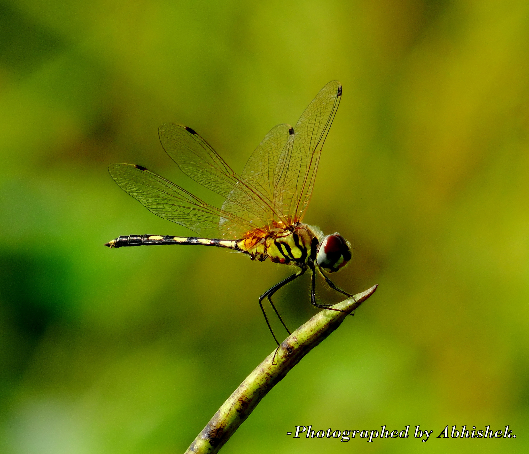 Photograph Grasshooper... by Abhishek Dey on 500px