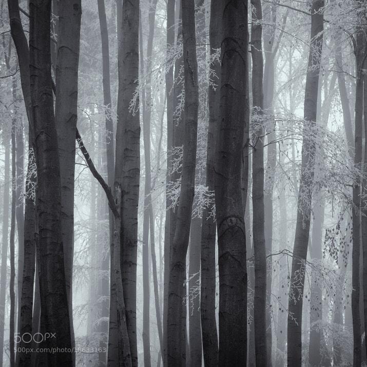 Photograph Silence by Jaromir Hron on 500px