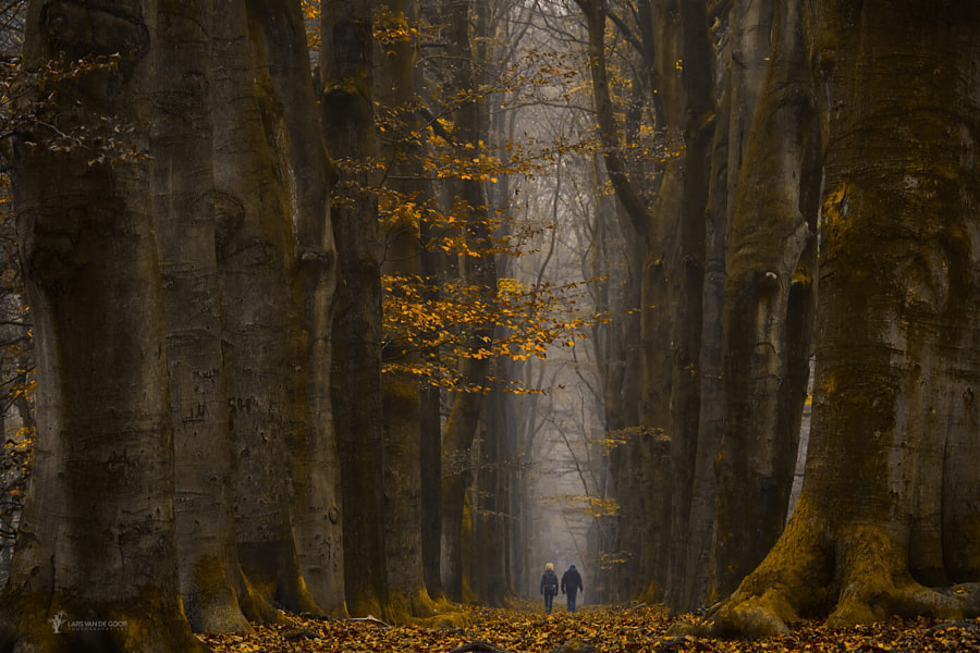 Among Giants by Lars van de Goor on 500px.com