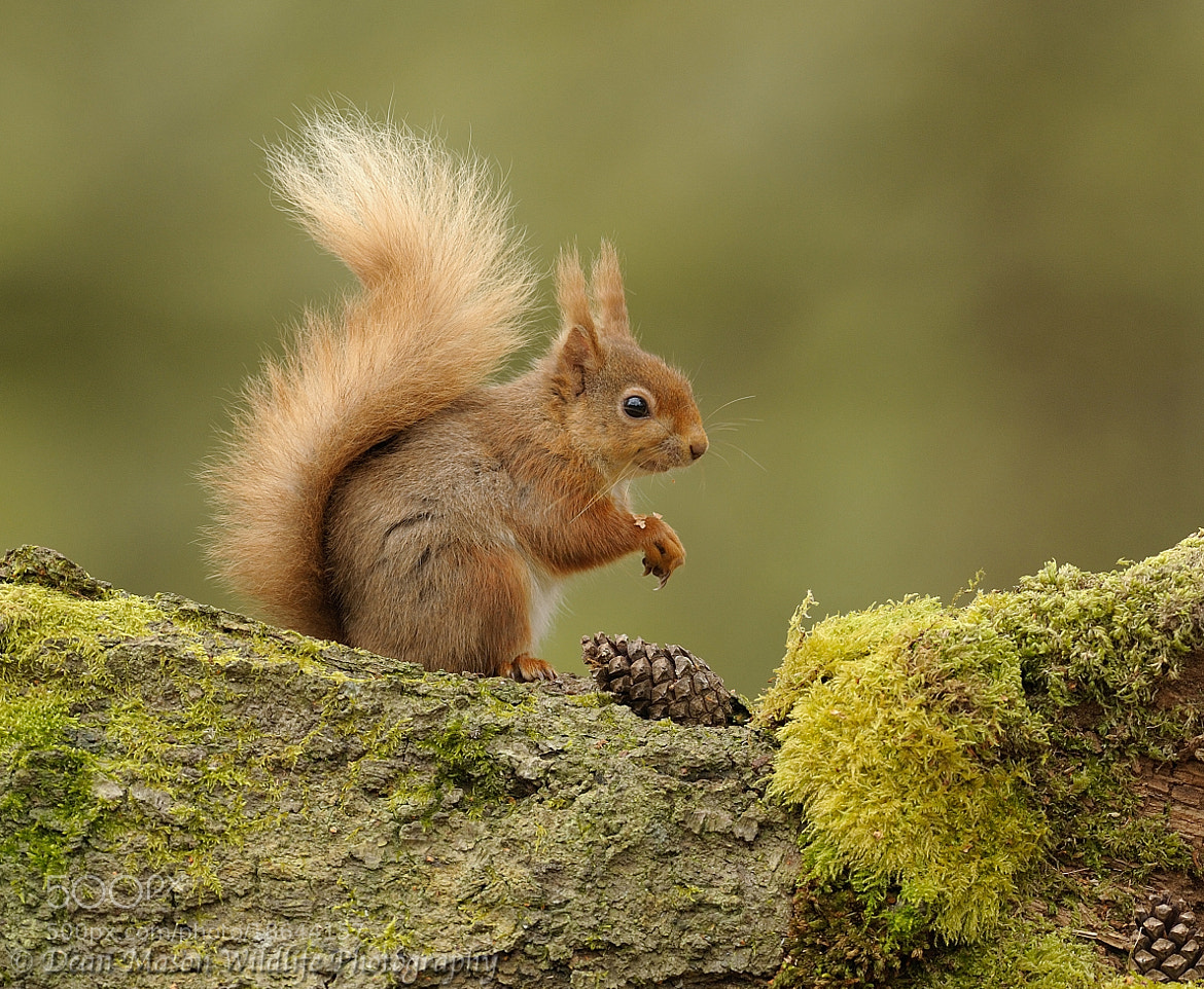 Photograph Brownsea Red by Dean Mason on 500px