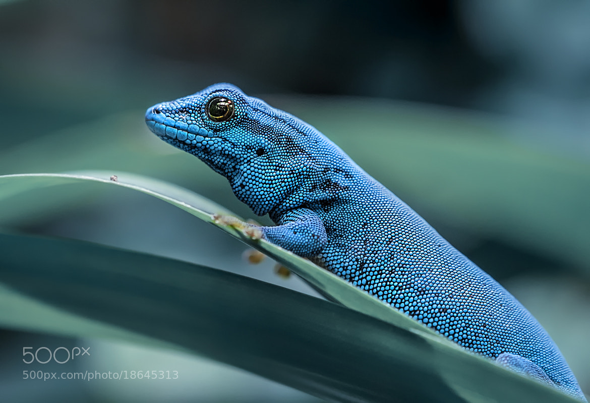 Photograph blue by Detlef Knapp on 500px